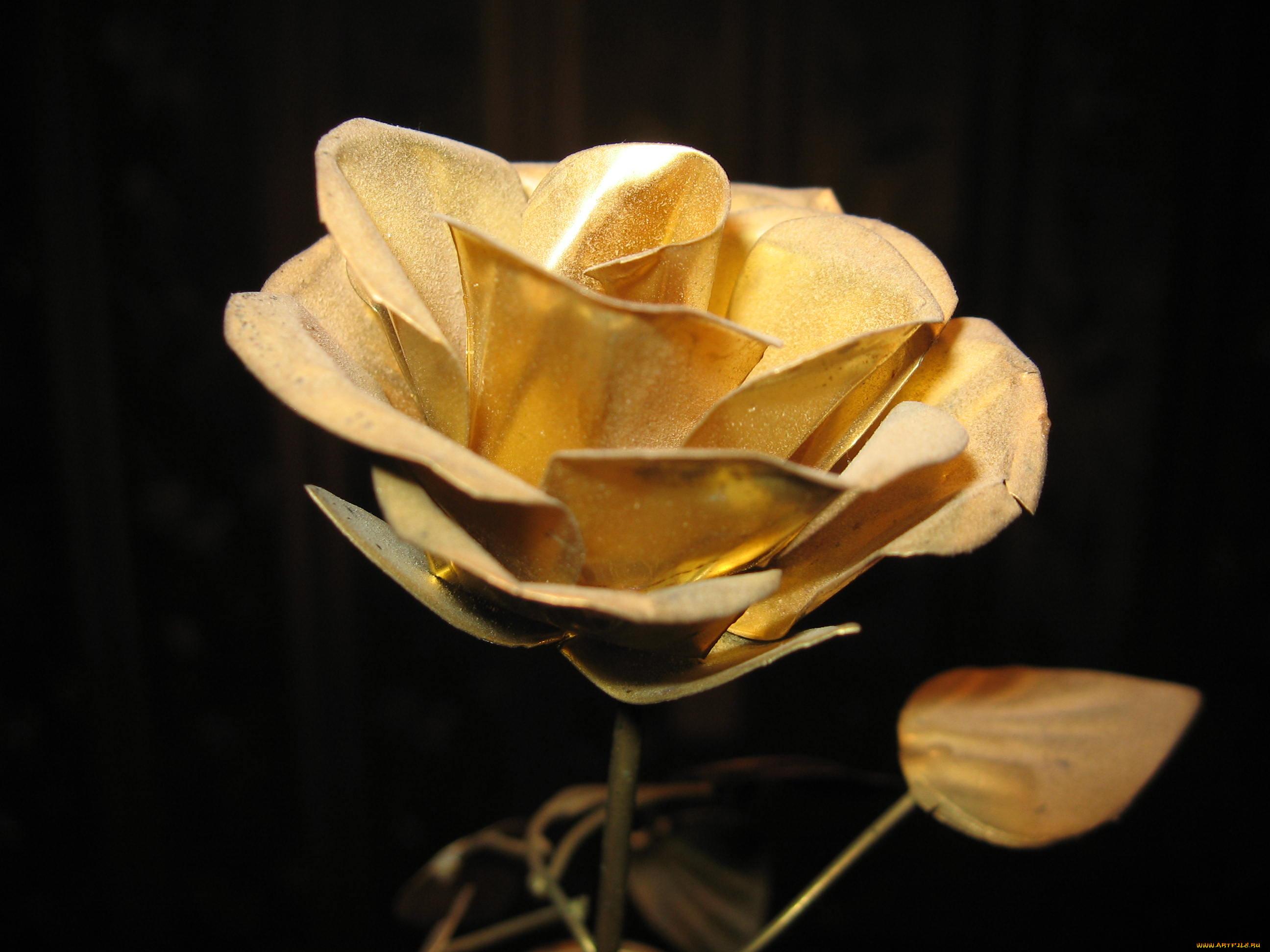 Красивые картинки золотая роза